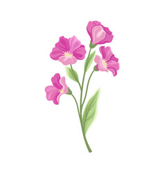 Large pink flowers on a white vector