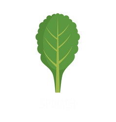 spinach icon flat style vector image
