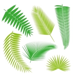 Tropical palm Leaves Collection isolate vector image