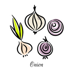 onion doodle different types set vector image vector image