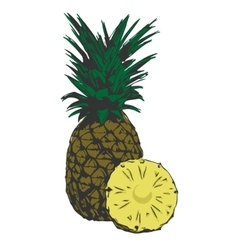 organic pineapple tropical vector image