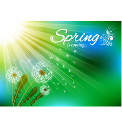 Spring dandelions with flying fluff on sky vector