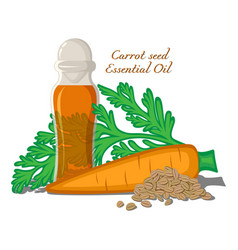 carrot seed essential oil vector image