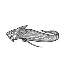 giant grenadier fish sketch engraving vector image