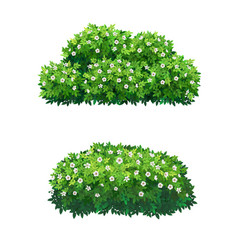 Green bushes and tree crown with white flowers vector