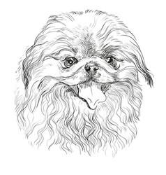 Portrait of pekingese dog vector