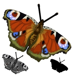 Beautiful colored butterfly isolated vector image vector image