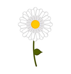 isolated daisy flower icon vector image
