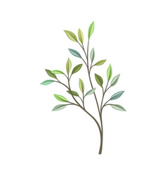 Branch with leaves different shades vector