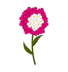 isolated cute verbena flower icon vector image