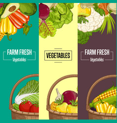 organic vegetable farming flyers set vector image