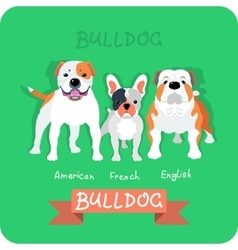 Set 3 bulldogs flat design vector image vector image