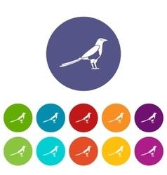 Bird magpie set icons vector