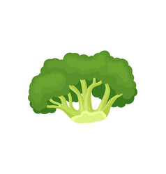 broccoli concept green vegetable on white vector image