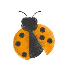 Drawing yellow ladybug animal insect garden vector
