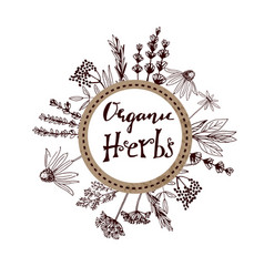 herbs and medicinal plants collection hand vector image