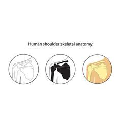 Set of human shoulder skeleton vector