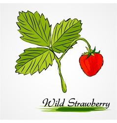 Wild strawberry vector