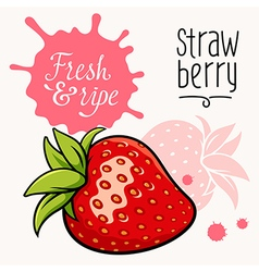 Strawberry concept 001 vector image vector image
