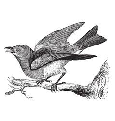Bluebird vintage vector