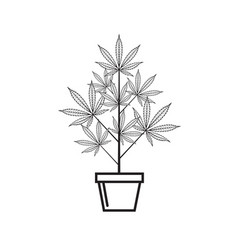 cannabis plant in pot vector image