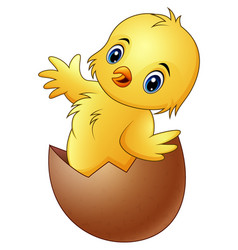 cartoon little baby chicken in the broken egg shel vector image
