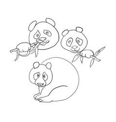 cute panda characters coloring book vector image