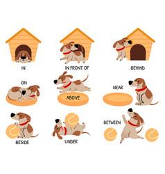 english prepositions with cute animal cartoon dog vector image