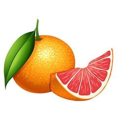 Fresh grapefruit on white background vector