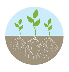 Graphic of young trees with root vector