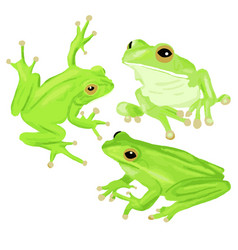 green tree frog set three vector image