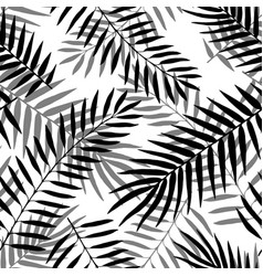 hand drawn black and white palm leaves vector image
