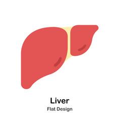 Liver flat vector
