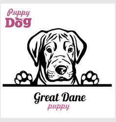 Puppy great dane - peeking dogs - breed face head vector