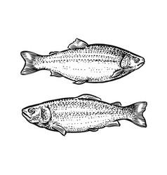 sketch fish hand drawn of vector image