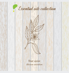 Star anise essential oil label aromatic plant vector