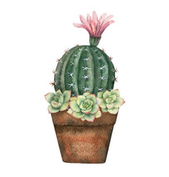 Watercolor composition of cacti and vector