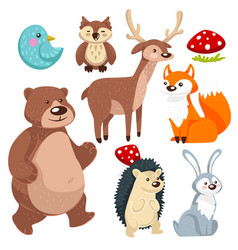 woodland animals flora and fauna forest vector image