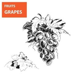 Hand drawn of grapes vector image vector image