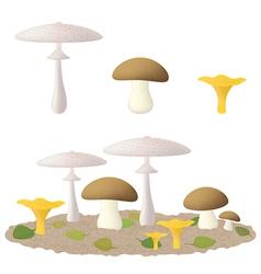 Edible mushrooms vector image vector image