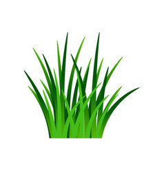 Dark green grass isolated on white vector
