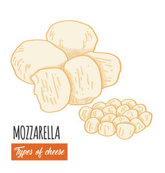 Hand drawn colorful mozzarella cheese vector