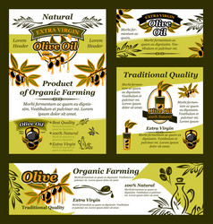 olive oil and fruit banner of organic product vector image