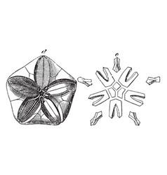 Pentremites vintage vector