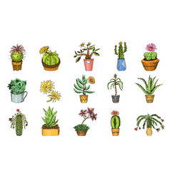 set cute cactus and succulents for cards vector image