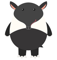tapir on white background vector image