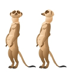 Two funny meerkat closeup on a white background vector