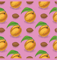 Seamless pattern with ripe apricot vector