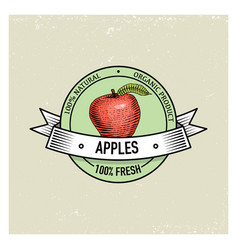 Apple vintage hand drawn fresh fruits background vector