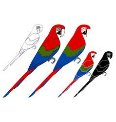 Arara vermelha bird in profile view vector